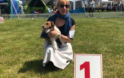 Dwa Championy – Międzynarodowa Wystawa Psów w Lesznie