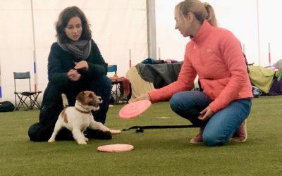 Szkolenie Dogfrisbee