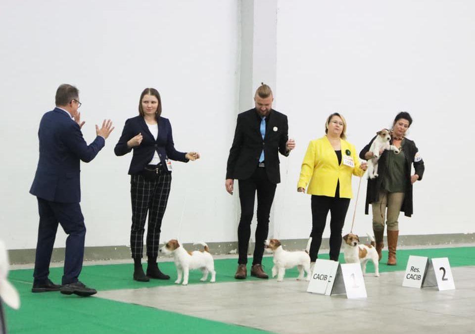 Międzynarodowa Wystawa Psów Rasowych w Kielcach